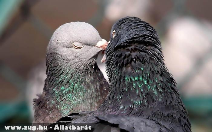 Csõrözõ madarak
