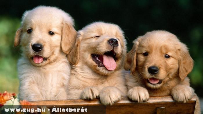 Kíváncsi kutyusok