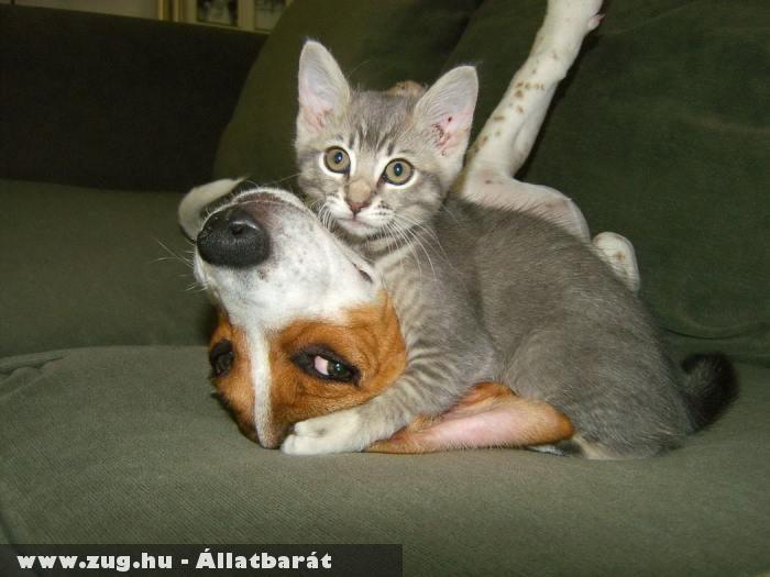 Lebirkózott kutya
