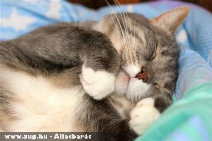 Lustálkodó cica