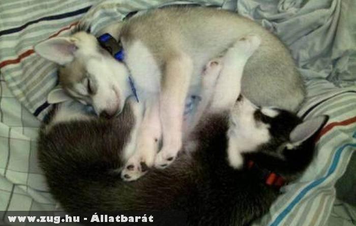 Pihenõ kutyakölykök