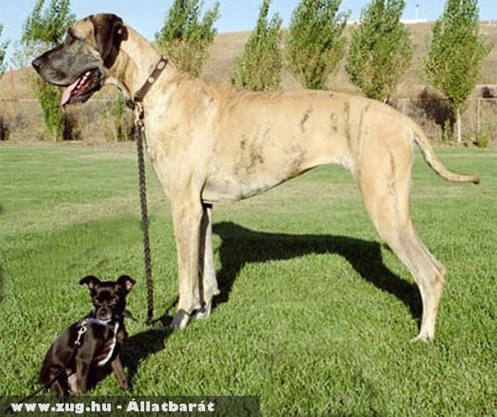 Kutyák minden méretben