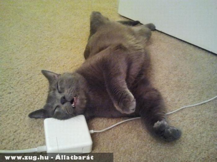Pihenés macska módra