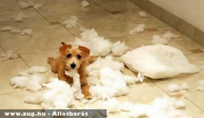 Rosszcsont kutyus