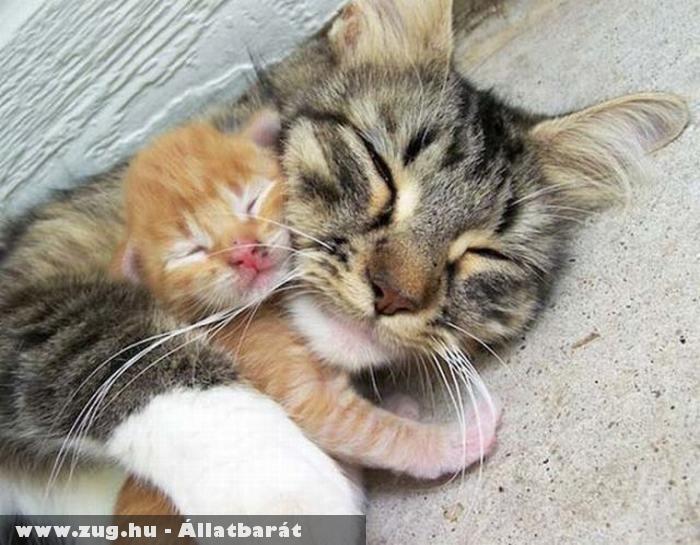 Összebújt cicák