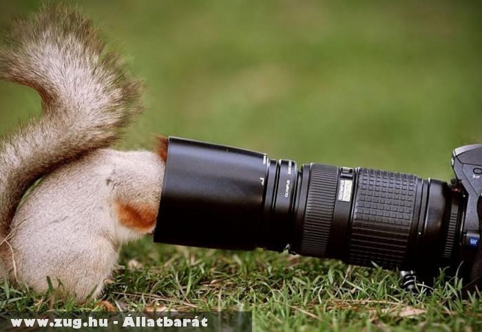 Kíváncsi mókus