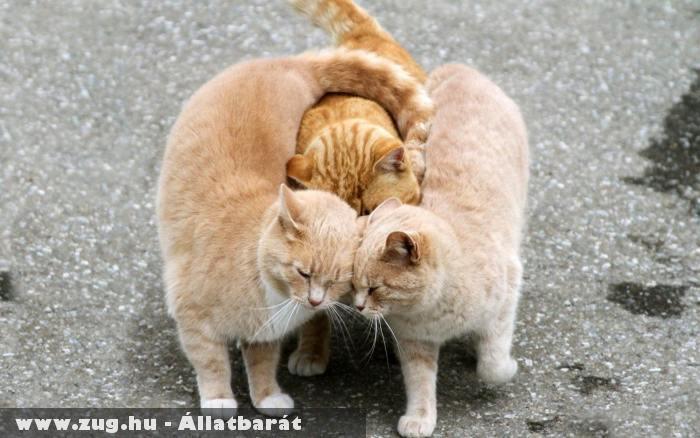 Cicák egymás közt