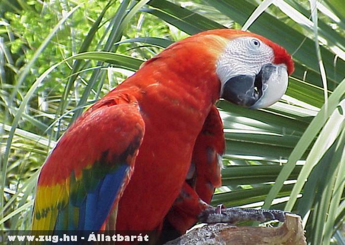 Színes papagáj