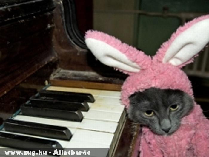 Nyúlnak öltözött cicu