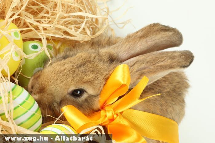 A húsvéti nyuszi és a húsvéti tojások