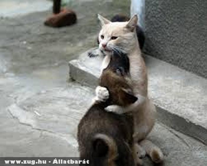 Macska - kutya barátság