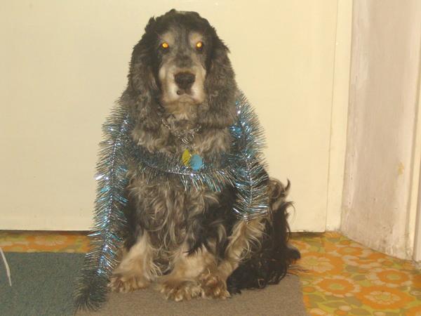 Maxi spani (karácsonykor)