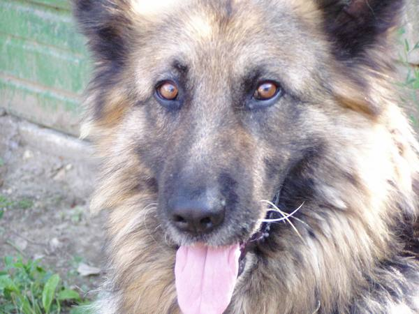 Géza, a kutyám