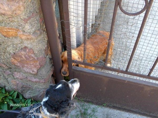 Maxi és a szomszéd Suzy