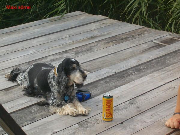 Maxi sörrel a stégen