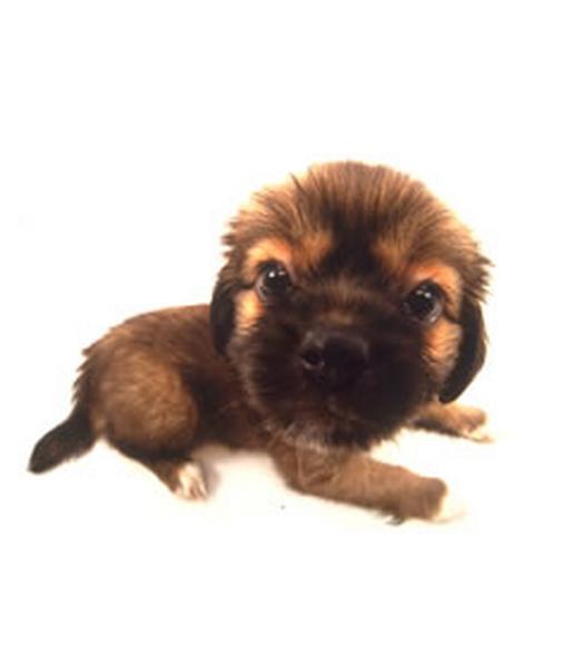 Oroszlános kutya :D