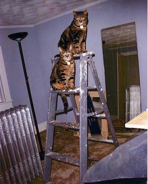 Macskák a létrán!