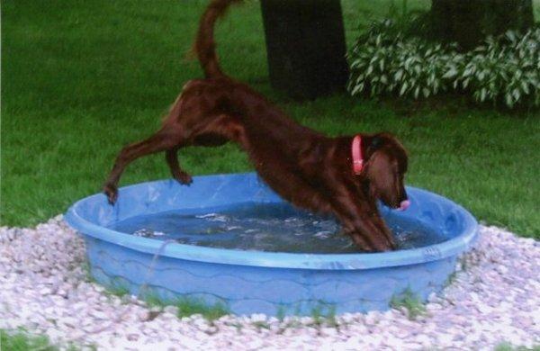 Rex a medencében keresi a kikapcsolódást