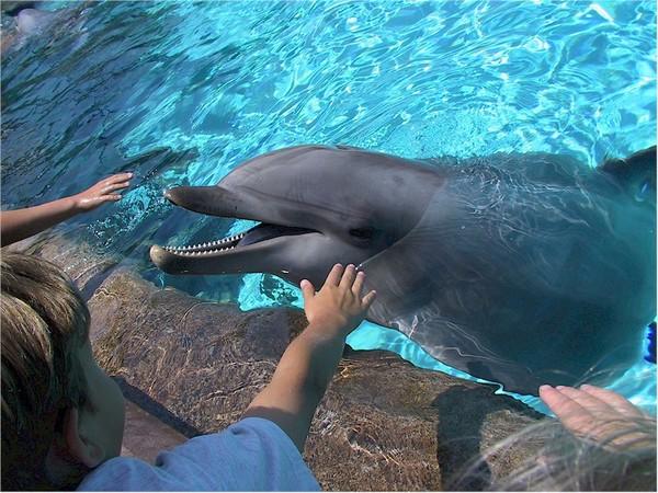 Delfinsimogatás