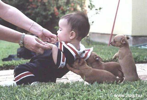 Kutyatár és a kisgyerek!