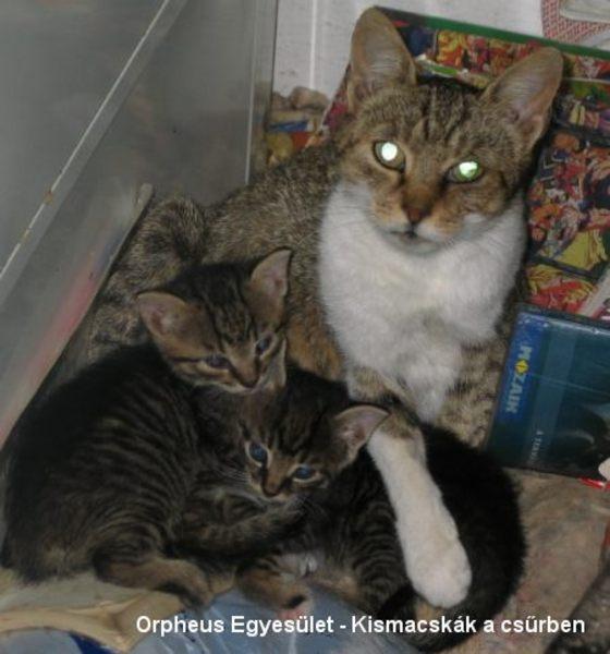 Macska fialt a csûrbe :)