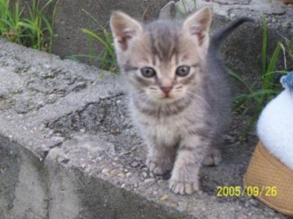 6 hetes cicák