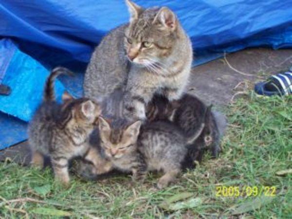 6 hetes cicák 2