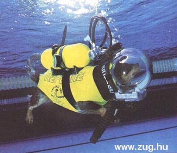 Könnyûbúvár kutya az óceán mélyén