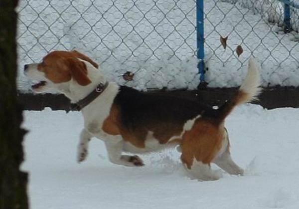 Bobi a hóban