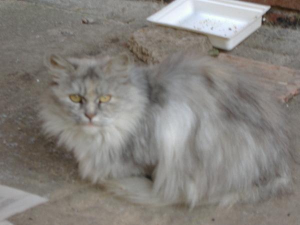 Perzsa lány (gazdit keres!)