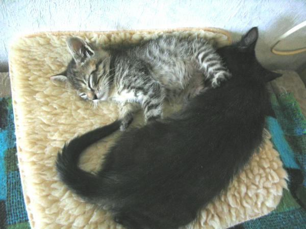 Luca és Berci együtt találtak végleges otthont
