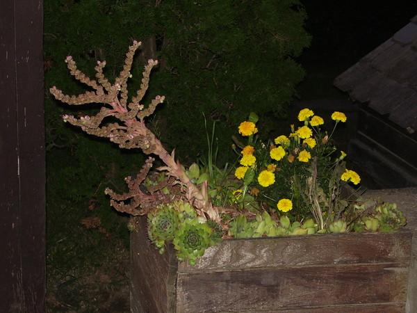 Növénykék a virágtartóban  :)