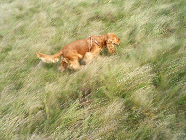 Futás közben