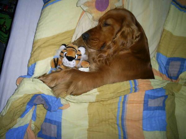 EDy alszik