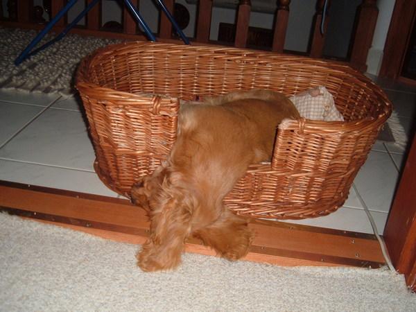 Sophie alszik