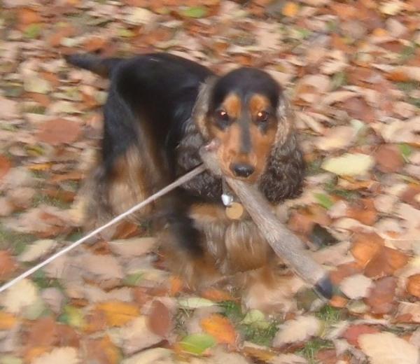 Õzpata a kutyánál