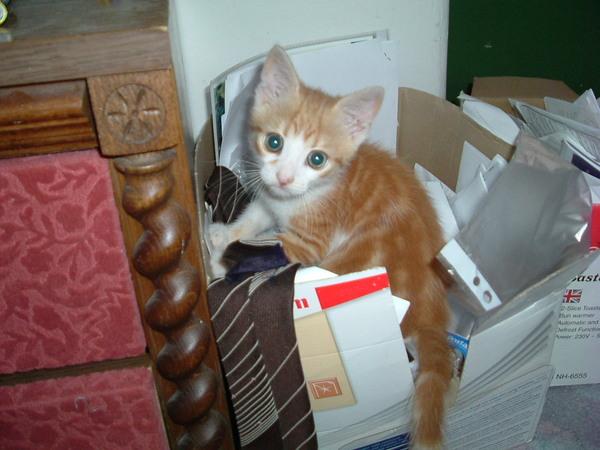 Archivist cat
