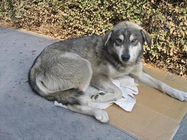 apróhirdetésben megtalálod a szöveget XXII.ker ben talált kutyus