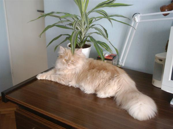 Tigris, a legszebb cica2