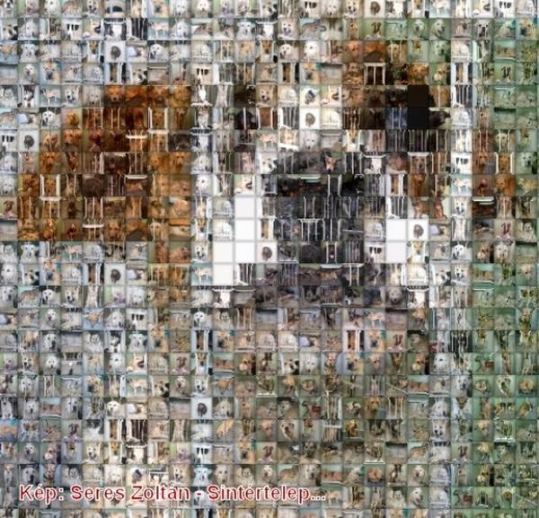 Sintértelep - sok kutya elpusztúl ott minden évben...