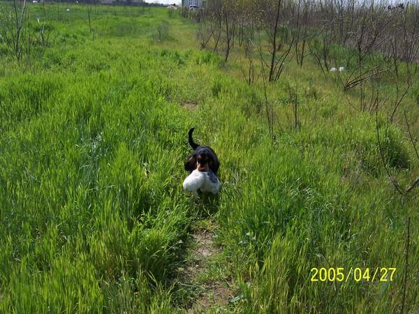 A kutya vadászat közben ;)