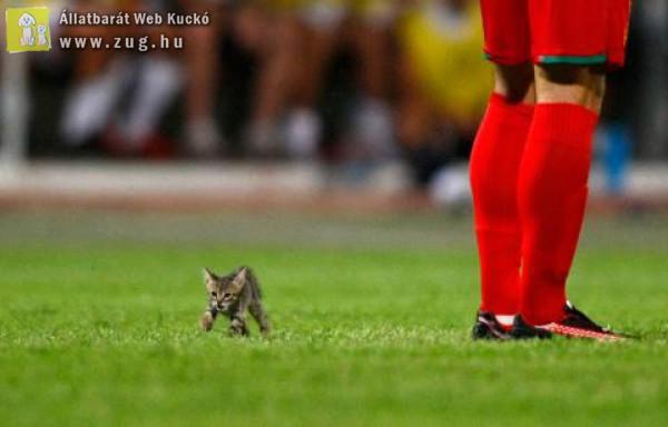 A cica bénította meg az egész stadiont :)