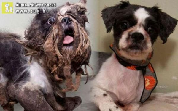 A kutyamentés gyakran egyenlő a visszaváltozással :)