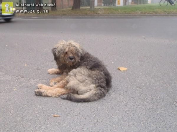 Autók elől megmentett kutyus