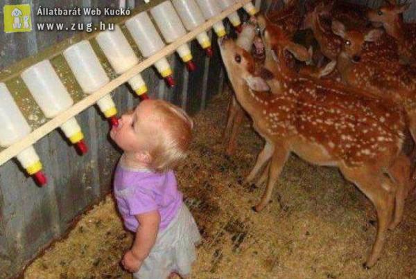 Az ifjú állatvédő :)
