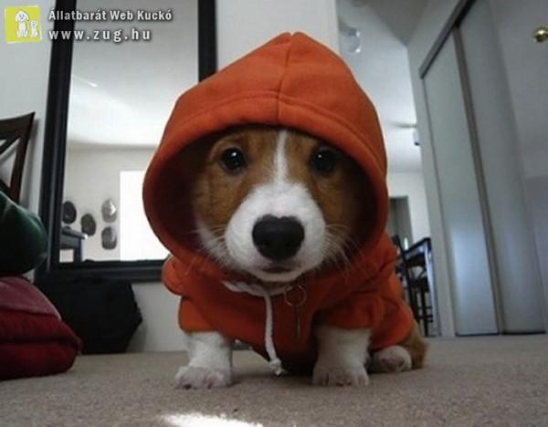 Bobi kutya egy igazi repper