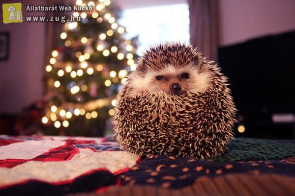 Boldog Karácsonyt Kívánunk :)