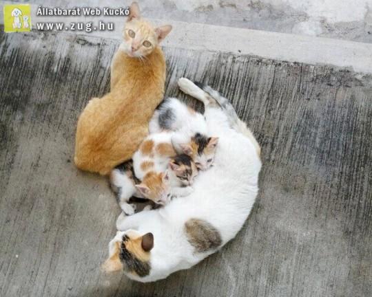 Cica - kiscicák