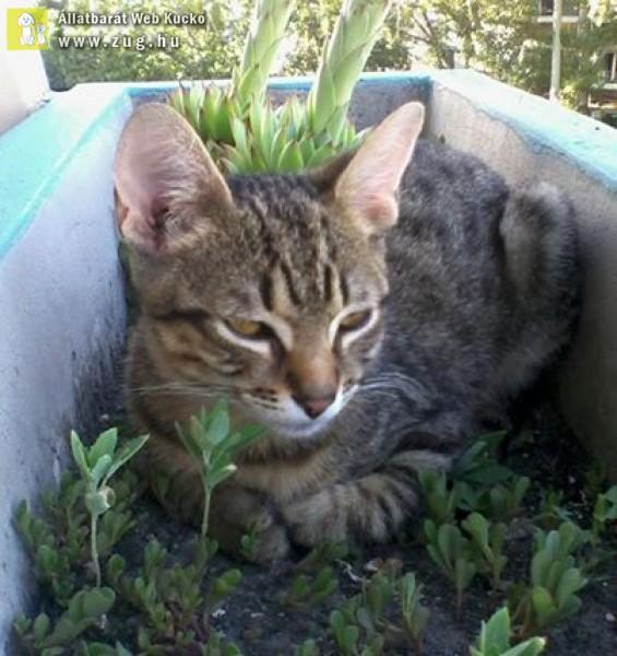Cica napozik a virágos ládában :)