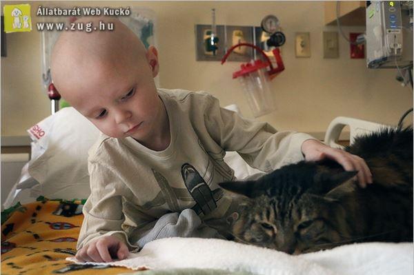 Cicák bevetésével folyik a gyerekek gyógyítása - terápiás macskák